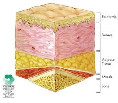 The skin is an effective barrier against many pathogens. (Source)