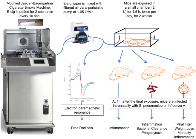 The experimental set up used to expose mice to e-cigarette vapors (Sussan et al, 2015)